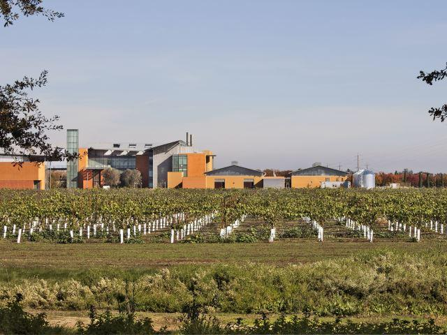 Campus Vineyard