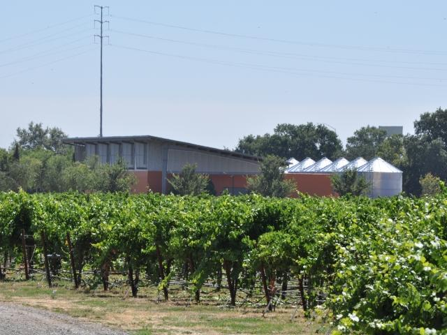 RMI Vineyard